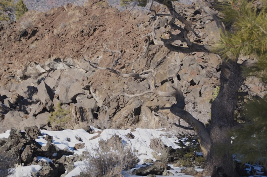 This part of the trail is on the southwestern edge of the Sunset Crater above the Bonito Lava Flows.