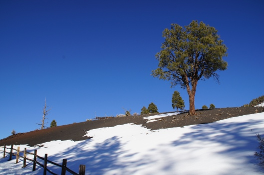 Southern side of Sunset Crater, on the Lava Flow Trail.