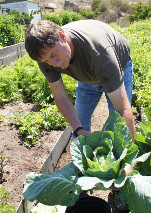 Bryon with one of the cabbages that went into coleslaw. These are sweeter than the ones that come from the store.
